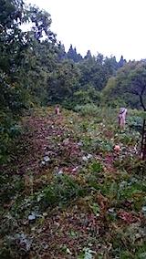 20150911栗畑の草刈り後の様子3