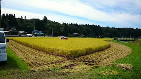 20150916秋田市で稲刈り始まる1