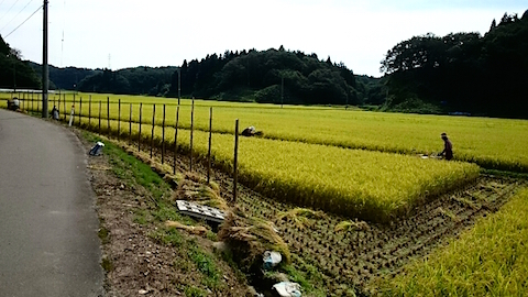 20150916秋田市で稲刈り始まる5
