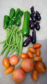 20150916野菜畑収穫した野菜