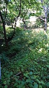 20150916栗畑の草刈り前の様子4