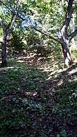 20150916栗畑の草刈り後の様子5