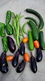 20150917野菜畑収穫した野菜