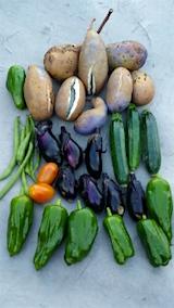 20151007今日収穫したあけびと野菜