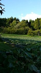 20151007ラベンダーの畑