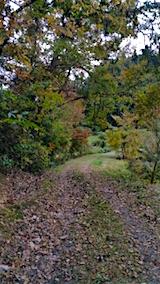 20151024山の様子ラベンダーの畑へと向かう急な坂道