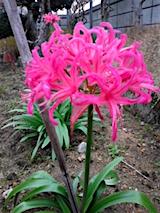 151123_153824きれいな花