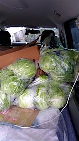 20151119秋野菜を車へ1