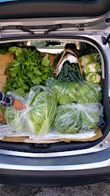 20151119秋野菜を車へ3