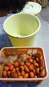 20151123ダイコンの柿漬け準備