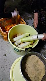 20151123ダイコンの柿漬け5