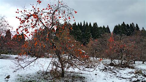 20151204山の様子柿の木2