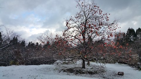 20151204山の様子柿の木3