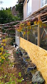20151205作業小屋の冬支度