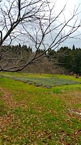 20151205ラベンダーの畑