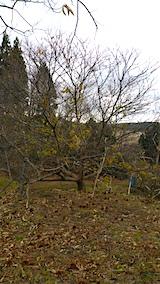 20151205栗畑正月