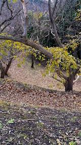 20151206栗畑の様子
