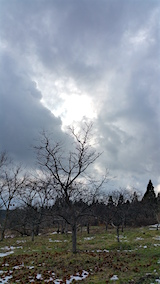 20160105栗畑の様子