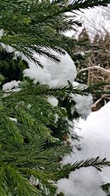 20160110山の様子雪がとけ始める