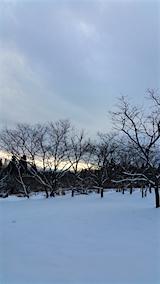20160113栗畑から南東の空を望む