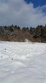 20160116ラベンダーの畑