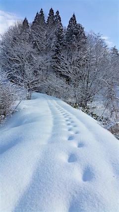 20160210ラベンダーの畑へと続く急な坂道の様子2