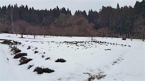20160229ラベンダー畑の様子