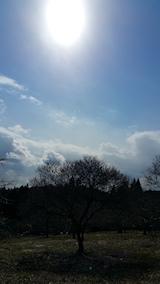 20160312山の様子花梅の木
