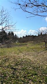 20160312ラベンダーの畑6