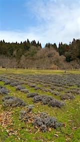 20160320ラベンダーの畑1