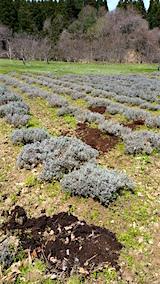 20160414昨年の土を畑へかえす2