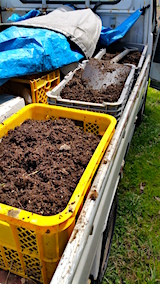 20160414鉢植えの入れ替え用の土