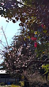 20160414山の入り口の様子梅の花1