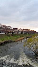 20160414百石橋より太平川沿いの桜を望む2