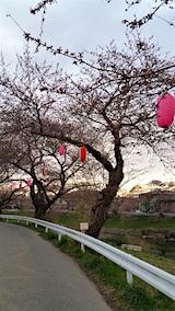 20160414太平川沿いの桜