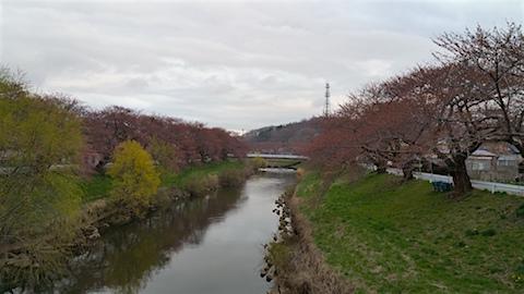 20160414愛宕下橋より太平川沿いの桜を望む1