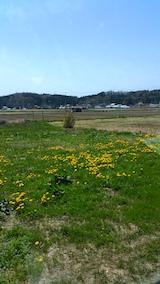 20160424山からの帰り道の様子たんぽぽの花