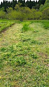 20160512ラベンダー畑周囲の草刈り前1