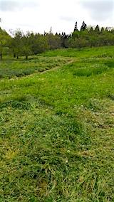 20160512ラベンダー畑周囲の草刈り前2