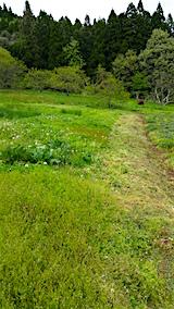 20160512ラベンダー畑周囲の草刈り前3