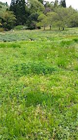 20160512ラベンダー畑周囲の草刈り前5