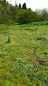 20160512ラベンダー畑周囲の草刈り後4
