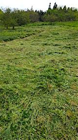 20160512ラベンダー畑周囲の草刈り後2