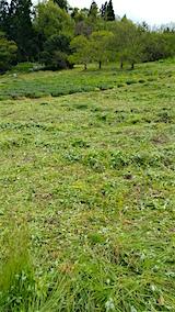 20160512ラベンダー畑周囲の草刈り後5