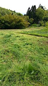 20160512ラベンダー畑周囲の草刈り後6