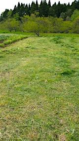 20160512ラベンダー畑周囲の草刈り後1