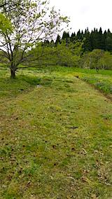 20160512ラベンダー畑周囲の草刈り後7