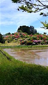 20160515山へ向かう途中の様子ツツジの咲く丘1
