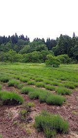 20160601ラベンダーの畑