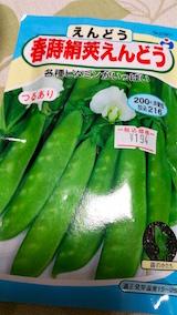 20160608えんどう豆の種